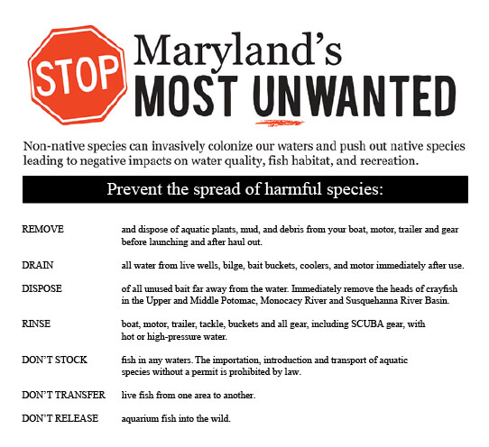 Invasive species maryland fishing regulations guide for Maryland fishing license