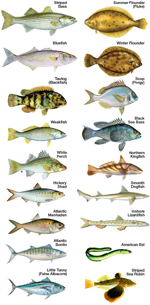 Florida freshwater fish size chart all the best fish in 2018 for Florida freshwater fishing license