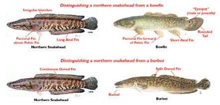 New york city new york fishing regulations guide 2017 for New york fishing regulations