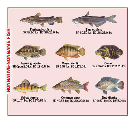 fish size chart fl all the best fish in 2018