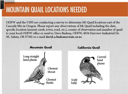 Game bird seasons oregon game bird hunting seasons for Oregon fishing license cost 2017
