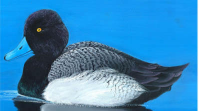 Rhode Island Migratory Bird Hunting
