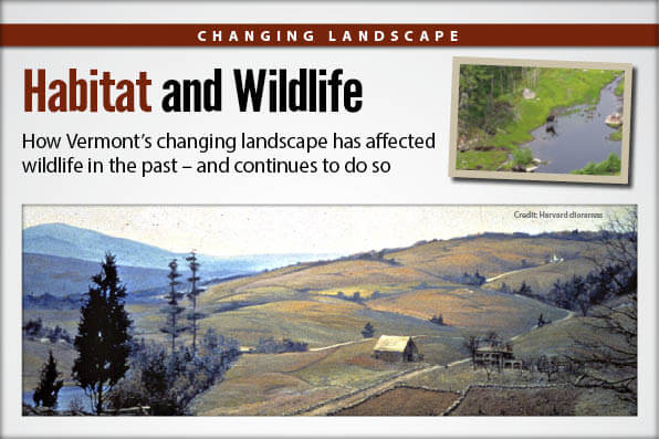 Habitat and wildlife vermont hunting seasons for Vt fish and game license