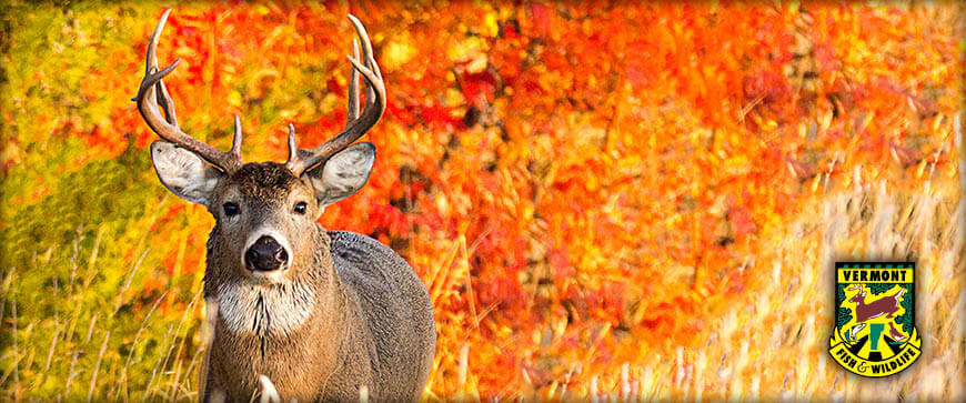Welcome to the Vermont Hunting & Trapping Regulations
