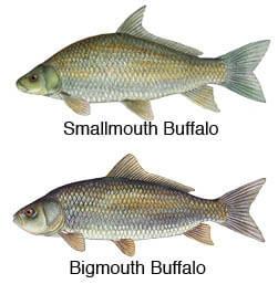 Freshwater Fishing Louisiana Fishing Regulations