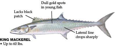 Georgia Fishing Regulations Guide - 2019 Eregulations Description