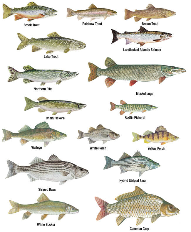 nj fish and game fishing license | Gameswalls org
