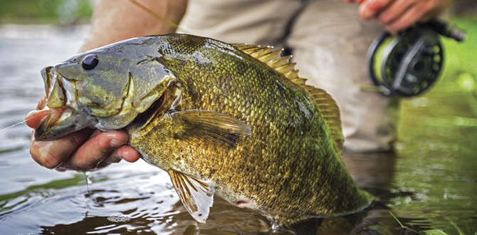 Bass fishing in vermont vermont fishing season for How does mercury get into fish
