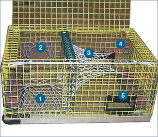 Lobster crab trap requirements massachusetts saltwater for Mass fishing regulations