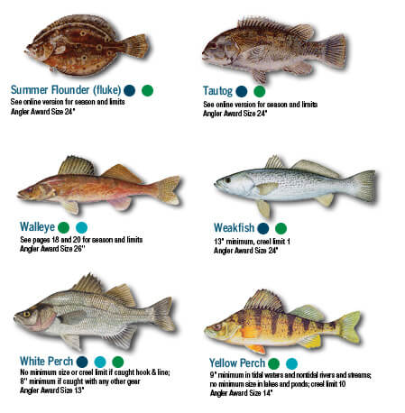 Fish identification maryland fishing regulations 2018 for Maryland fishing license