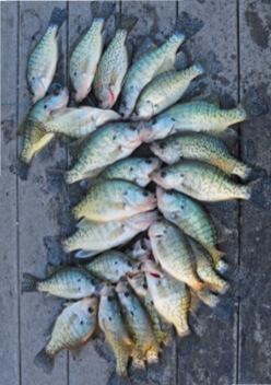 Fish consumption indiana fishing regulations 2018 for Indiana fishing license