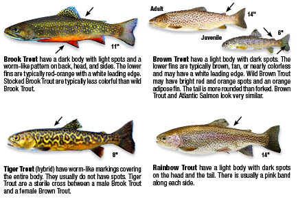 A Guide to Catchable Freshwater Fish | Connecticut Fishing