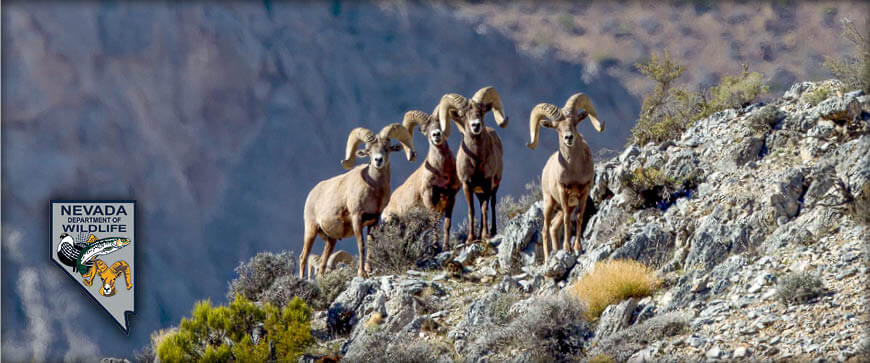 Nevada big game hunting seasons applications 2018 for Nevada game and fish