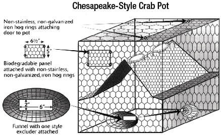Shellfish crab information new jersey saltwater for Nj saltwater fishing registry