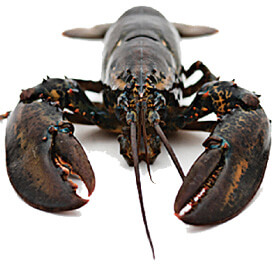 Lobster crab regulations rhode island saltwater fishing for Ri fishing regulations