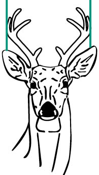 white tailed deer hunting mississippi hunting fishing seasons Whitetail Deer Butchering Diagram estimating a 10 inch spread is ac plished by observing a buck s ears in the alert position when in the alert position the distance from ear tip to