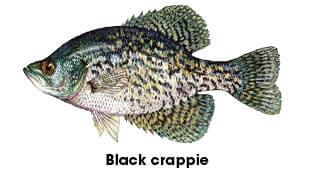 Fish Identification New Hampshire Freshwater Fishing