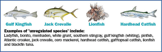 Coastal Species Florida Saltwater Fishing Regulations 2019