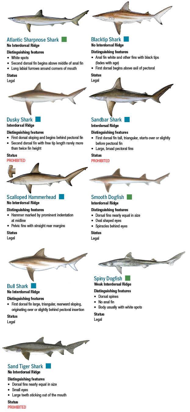 Sharks | Maryland Fishing Regulations – 2019 | eRegulations