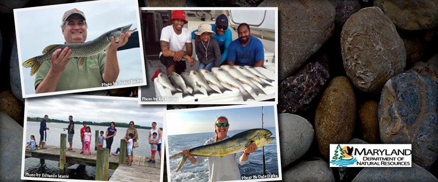 Maryland Fishing Regulations – 2019 | eRegulations