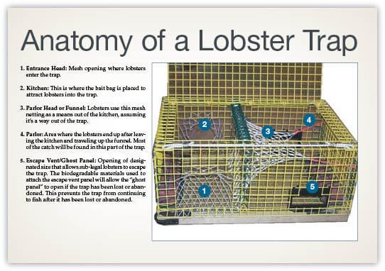 Lobstercrab Trap Requirements Massachusetts Saltwater Fishing