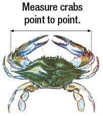 Mollusks & Crustaceans   New Jersey Saltwater Fishing