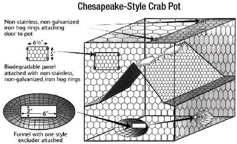 Shellfish & Crab Information | New Jersey Saltwater Fishing