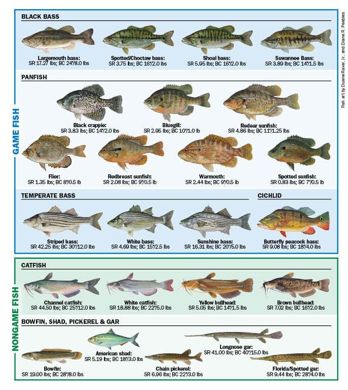 Freshwater Fish of Florida | Florida Freshwater Fishing