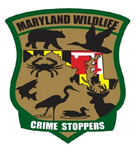 Department of Natural Resources | Maryland Hunting Seasons