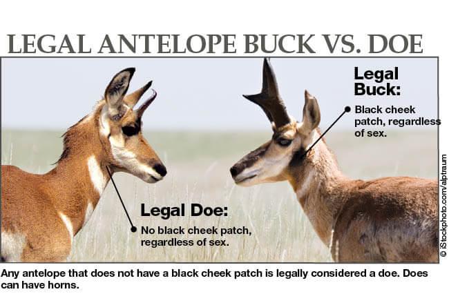 Antelope Hunting Seasons Oklahoma Hunting Seasons