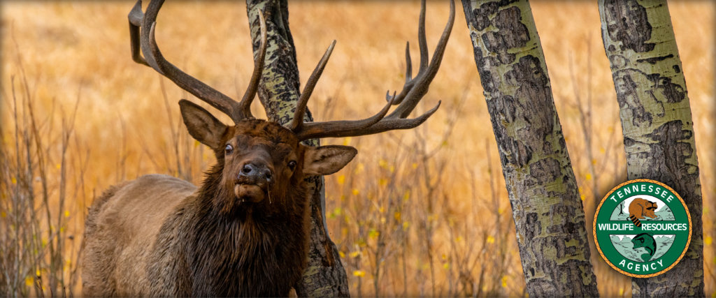ohio youth deer season 2020