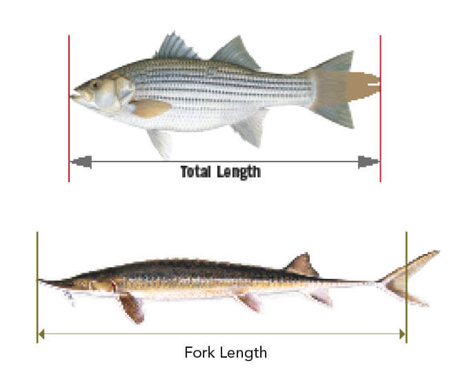 Basic Fishing Information Indiana Fishing Regulations 2020 Eregulations