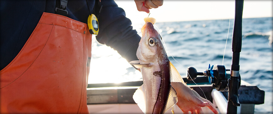 Massachusetts Saltwater Fishing Regulations 2020 Eregulations