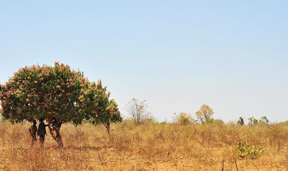 Two boys examine a tree in Zambia.