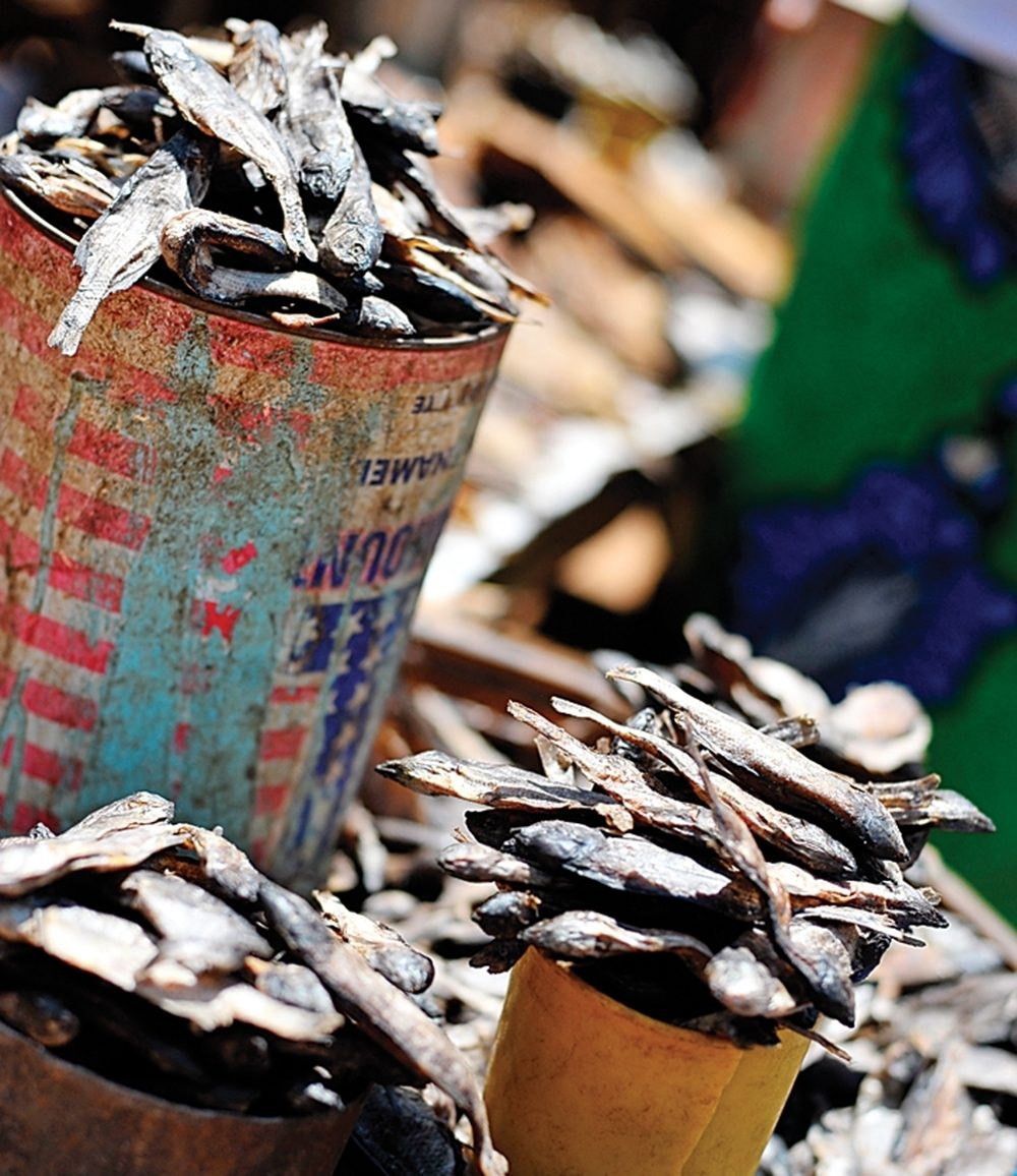 Repurposed cans contain smoked fish.
