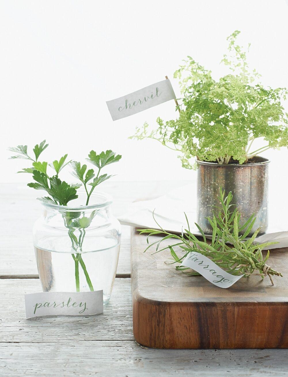 Parsley, tarragon and chervil herbs