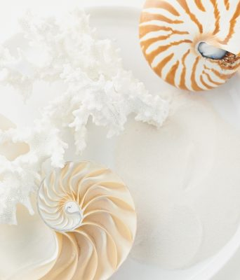 Tiger nautilus, top, are easily identified by the muted brown striping on  their shells. Each compartment in a nautilus shell, bottom, represents a growth period in its life.