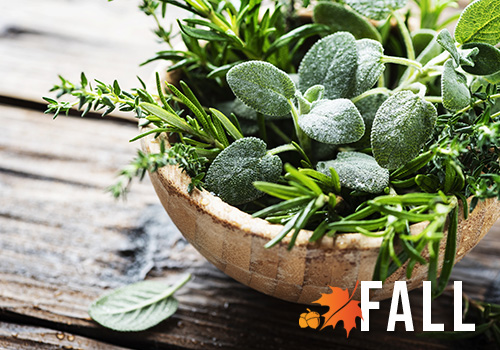 bowl of fresh herbs