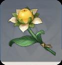 Сладкий цветок
