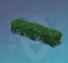 Blooming Hedge