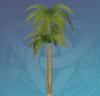 Whitesand Coconut Tree