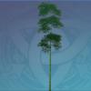 Qingce Jadestone Bamboo