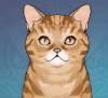 Tiger-Striped Cat