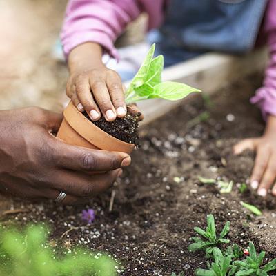 Family planting 400x400