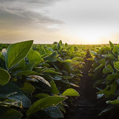 Field crops 400x400
