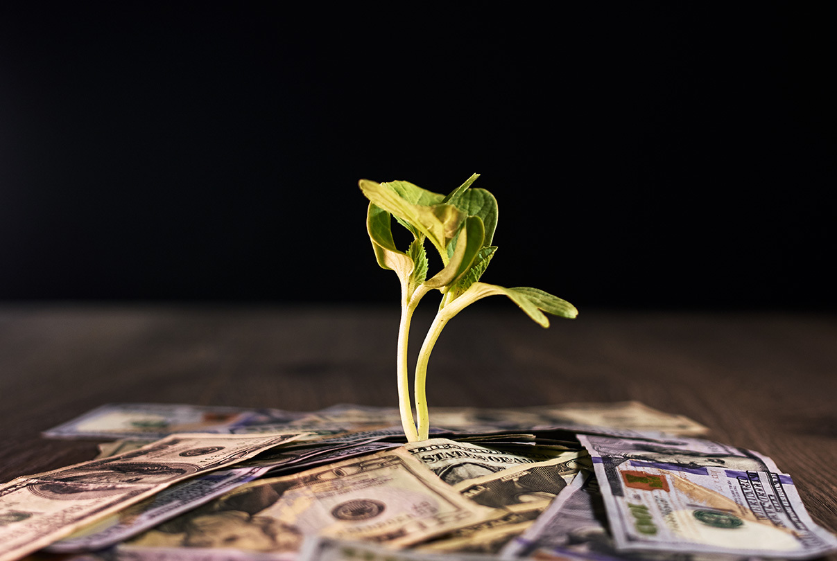 Stock plant growing from money