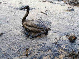 Camping bird in oil marine photobank cc by 2 0 300x225