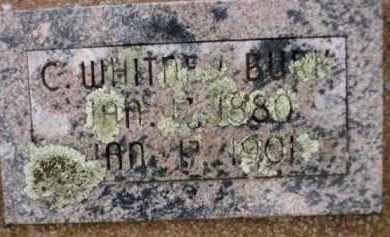 BURK, C. WHITNEY - Apache County, Arizona | C. WHITNEY BURK - Arizona Gravestone Photos