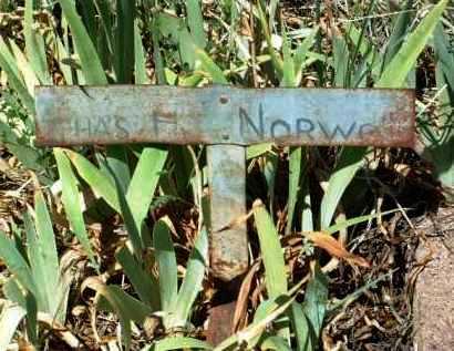 NORWOOD, CHARLES HENRY - Yavapai County, Arizona | CHARLES HENRY NORWOOD - Arizona Gravestone Photos