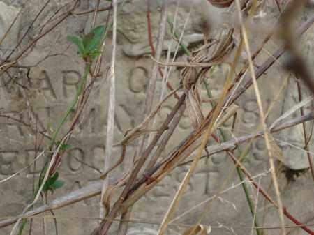 GREEN, MARY - Hempstead County, Arkansas   MARY GREEN - Arkansas Gravestone Photos